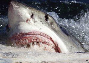 žraloci.titulka