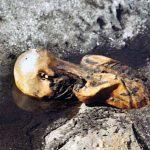 """Ötzi: """"Kosí"""" vědce kletba pravěkého šamana?"""
