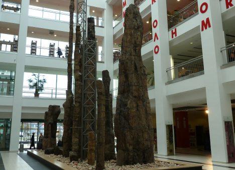Foto: Zkamenělý les? Nemusí být jen v bajkách pro děti!