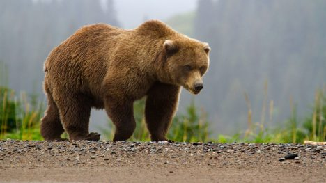 Foto: Rozkošní medvědi: Jsou škodnou zvěří?