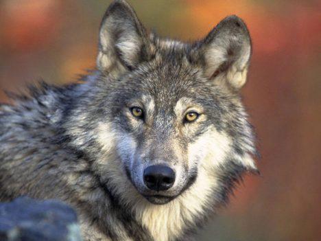 05 - Dnešní savci bývají úzce specializovaní živočichové.