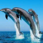 Neuvěřitelné zjištění: Delfíni se navzájem oslovují jmény!