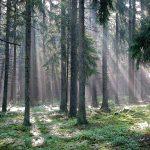 To musíte vidět: 8000 let starý prales v srdci Evropy!