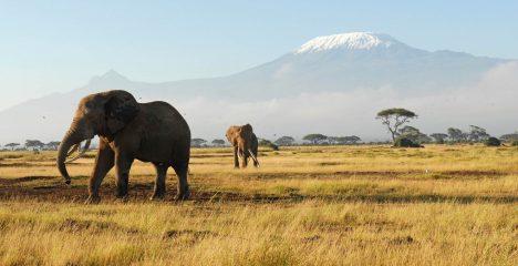 Foto: Neznámé dějiny Afriky: Vzestupy a pády černého kontinentu!