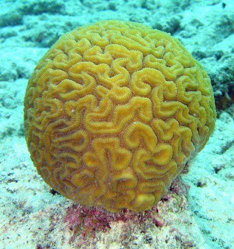 Foto: Nastává soumrak čínských korálových útesů?