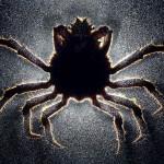 Vynalézavost parazitů nezná mezí: Uhnízdí se i ve vašem mozku?