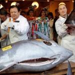 Unikátní delikatesa: Modrý tuňák si podmanil Japonsko!