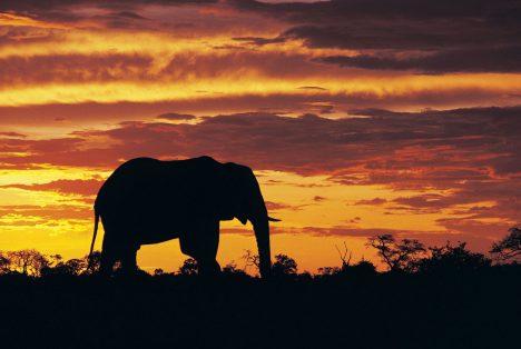 Foto: Afrika hlásí: Slonů tu žije stále méně!
