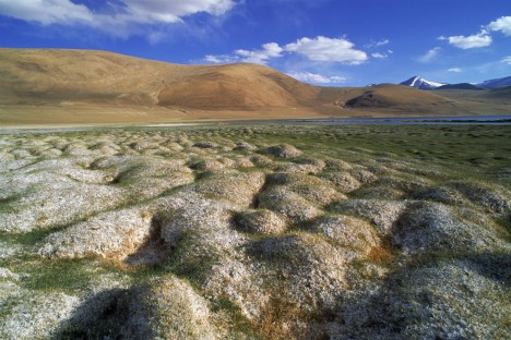 Tussocks of permafrost next to water, with mountains in background, Ladakh, India