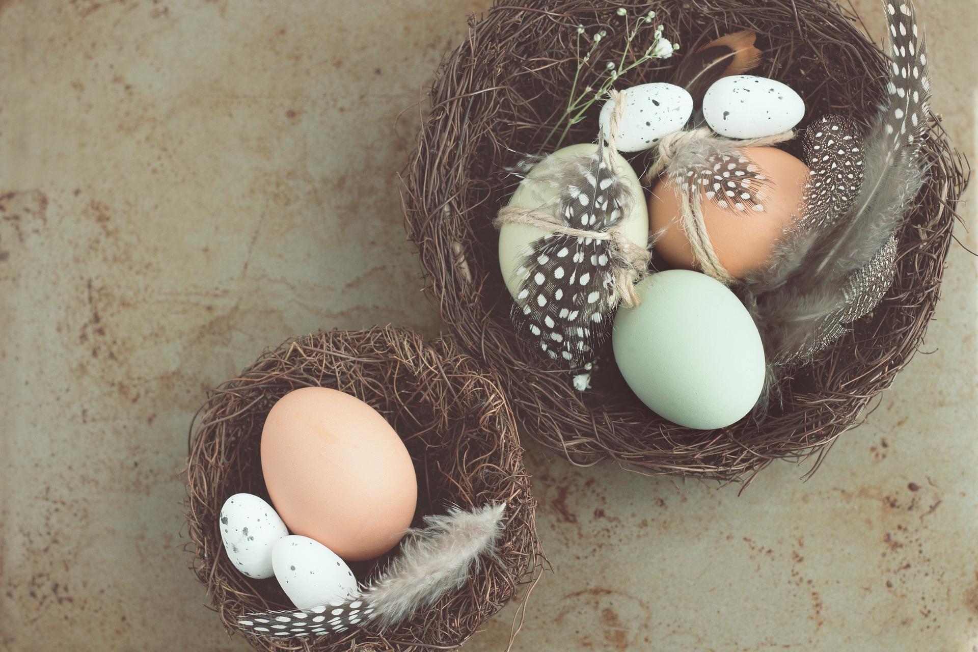 Co jste nevěděli o vejcích?
