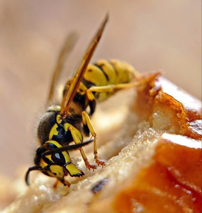 Pokrmy v dobách nedostatku: Po Napoleonských válkách se jedly hmyzí delikatesy