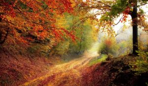 Doba chytrých veverek a padajících vlasů. Co jste netušili o podzimu?