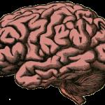 Umělé mozečky pomohou s Parkinsonovou chorobou