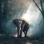 Velikáni zvířecí říše – Kdo je největší?