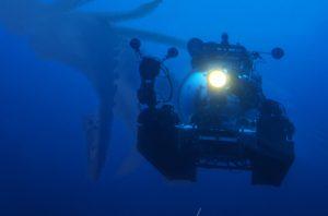 Záhadný kraken: Jde o opravdového tvora?