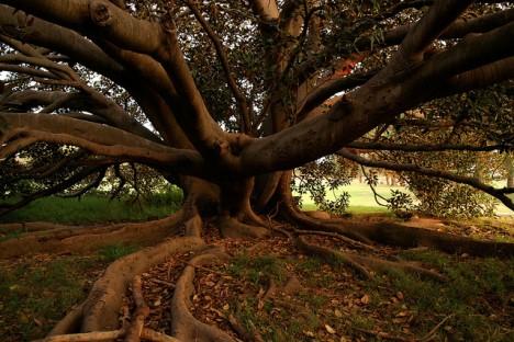 Místní z Patrame prý nebezpečný strom již pokáceli.
