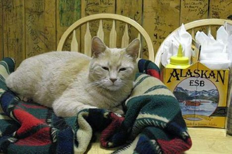 Foto: Procházka kočičím světem: I kočky mají své dějiny!