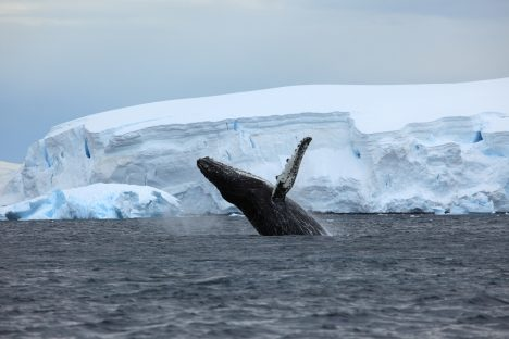 Foto: Tajuplní živočichové z mořských hlubin: Na co vědcům rozum nestačí?