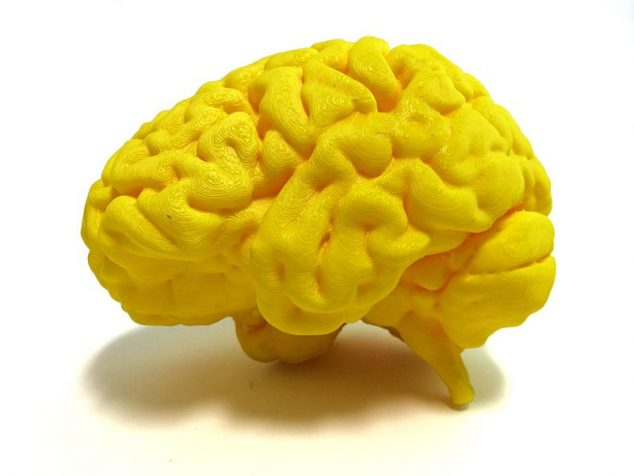 3DPrinted_Human_brain_26680098405_47fc44f43d_o