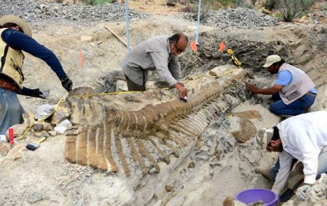 Undated handout picture released by the National Institute of History and Anthropology (INAH) showing paleontologists working in the excavation of a dinosaur tail in Coahuila State. AFP PHOTO/INAHINAH/AFP/Getty Images