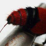 VIDEO: Dobrodruh si nechal dobrovolně dát hmyzí superžihadlo!