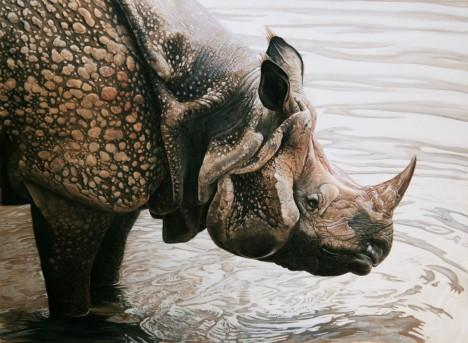 O existenci nosorožců neměla většina Evropanů ve středověku ani nejmenší potuchy.