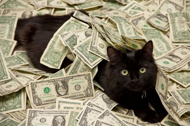 635946578428500642-473728939_Black-Cat-Rolling-In-Money