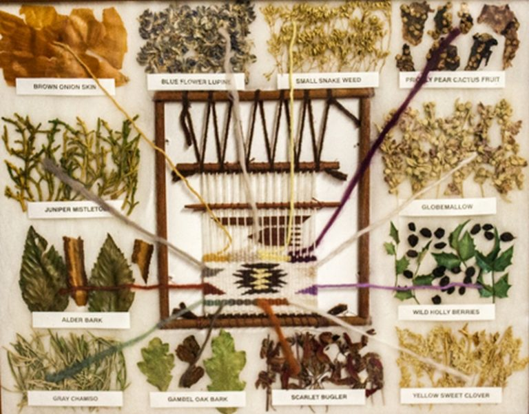 ethnobotany collections