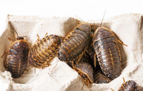 Foto: Zemi nevládne člověk, ale hmyz!