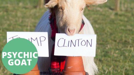 Foto: Neuvěřitelné: Zvířecí jasnovidci předpověděli vítězství Donalda Trumpa!
