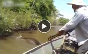 Brazilian Men Find Giant Snake In River
