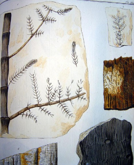 Fosílie přesličky. Paleontologické a geologické předměty a herbáře se stanou jádrem muzeálních sbírek. Hrabě Šternberk  shromáždil úctyhodných 145 000 exponátů.