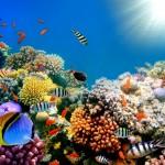 Korálové útesy umírají: Šanci na záchranu mohou dát superkoráli!