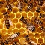 Hrozí nám globální katastrofa? Za mizením včel může být virus