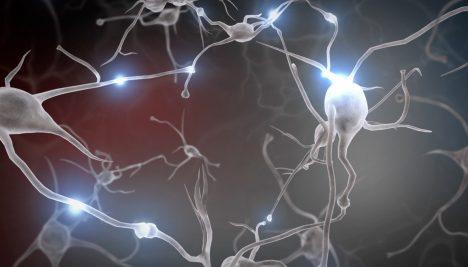Foto: Činky nejen pro svaly: Cvičení mění i tvar a vzhled našeho mozku!