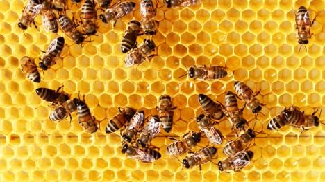 Včely jsou citlivé na změny počasí, s předstihem se snaží ukrýt před bouří ve svém úlu.