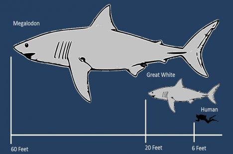 Foto: Co vyhubilo obří žraloky?