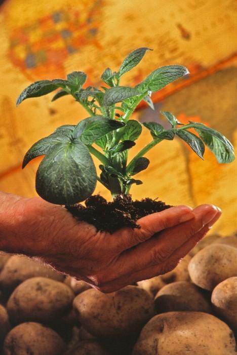 Na pohled nenápadná rostlinka si postupně podmaní celý svět.