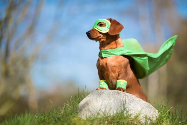 Masked superhero pet dog stood on boulder