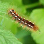 4 nejjedovatější druhy hmyzu vČR: Nemáme tu jen vosy a sršně!
