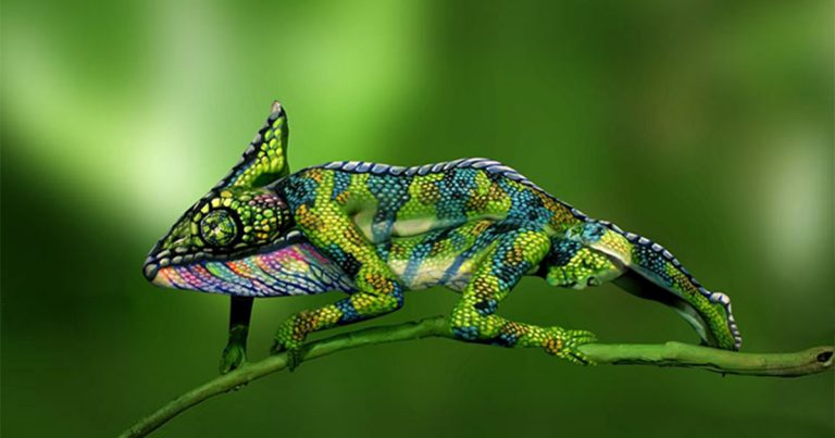 chameleon-body-painting-optical-illusion-johannes-stotter-fb1