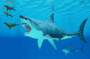 Seals race to get away from a giant Megalodon shark coming after them.