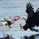 VIDEO: Orli ve službách armády ničí špionážní drony!
