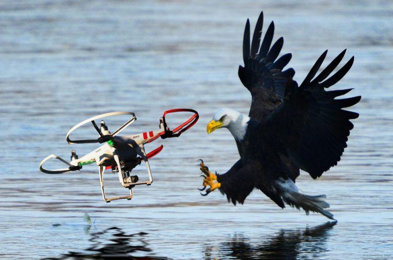 eagles-hunting-drones-hero-v1