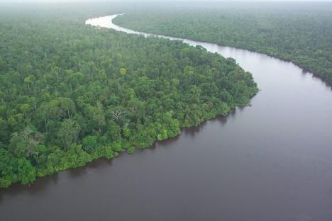 Tropický deštný les na Borneu.
