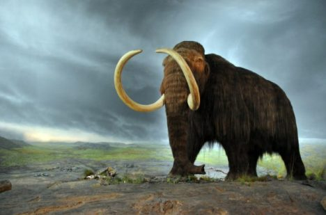 Foto: Další krok k Jurskému parku: Jakého tvora vědci oživují?
