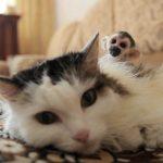 Neuvěřitelné: Kočka ředitelky v sibiřské zoo se stala náhradní matkou malé opičky