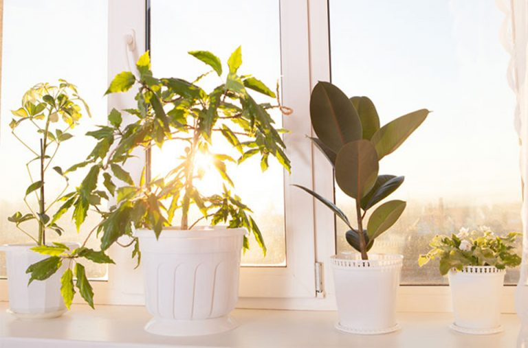 houseplants-on-windowsill-indoor-plants-to-purify-clean-air