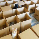 Dvě kočky a labyrint z krabic: Jak to dopadne?