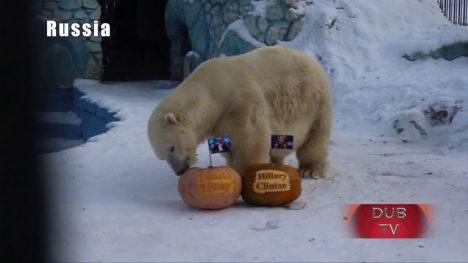 medvěd Felix